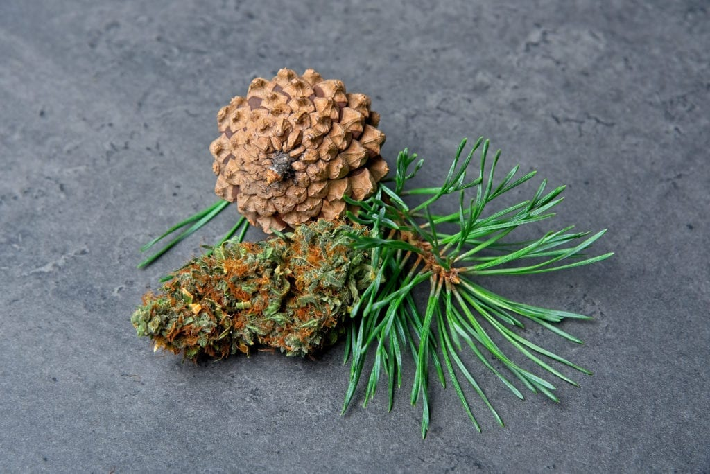A Pine cone and cannabis bud.